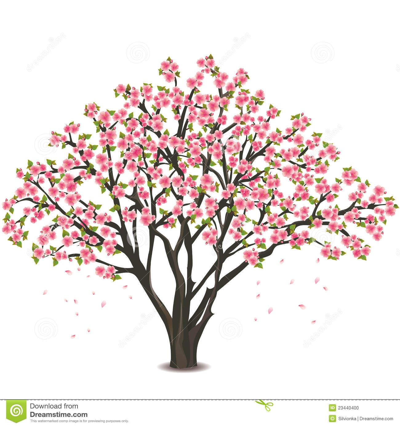 Diagram The Parts Of Cherry Blossom Tree 1966 Ford Mustang Wiring Japanese Over White Stock Photo