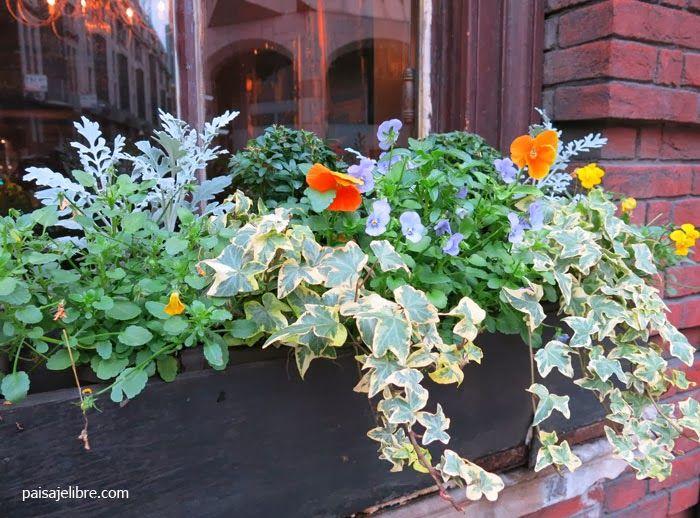 paisaje libre composiciones de plantas para jardineras en