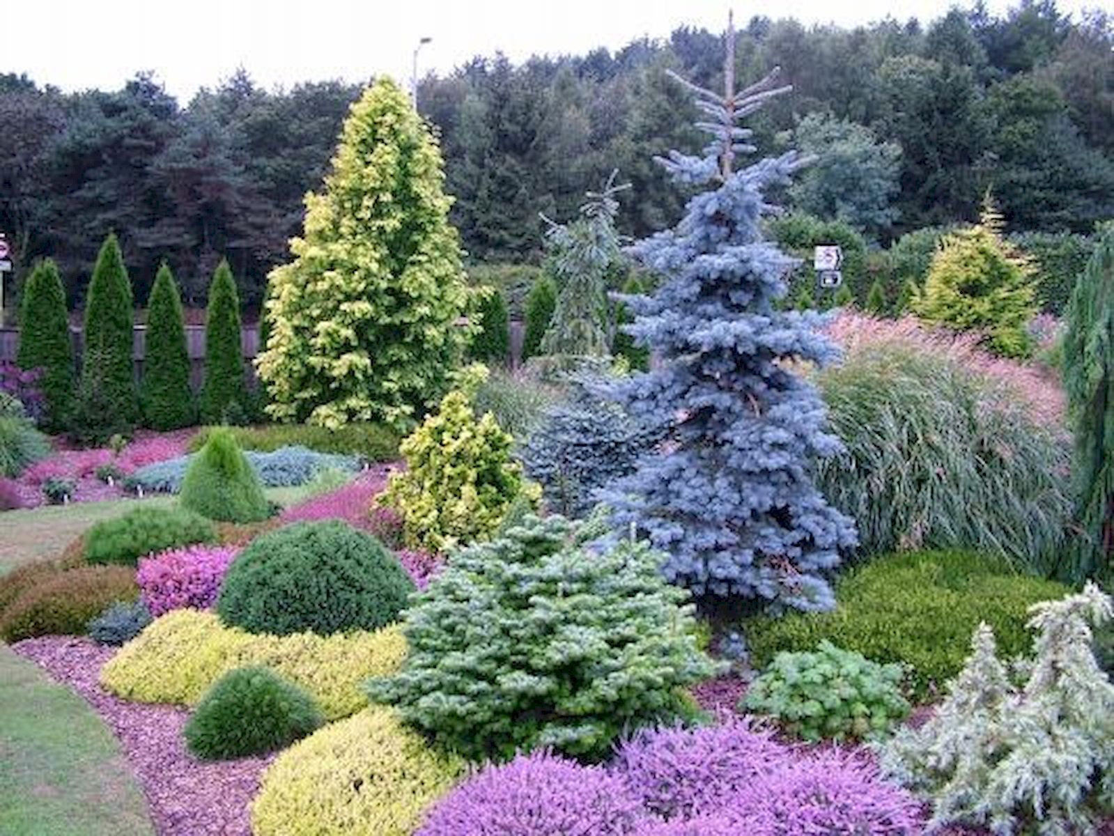 evergreen garden design
