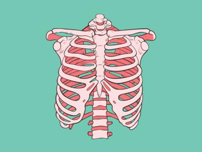 Bubble Gum Ribs Skeleton Drawings Rib Cage Drawing Anatomy Art