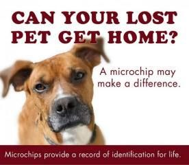 The Importance Of Microchips In Pets Losing A Pet Pets Find Pets