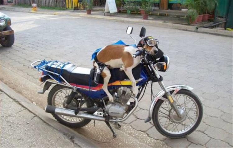 Motorcycle gangs have gone to the dogs.