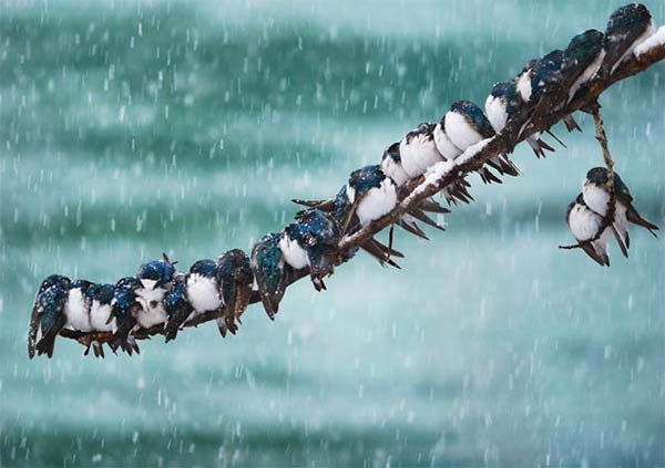 Image result for birds sitting on a branch