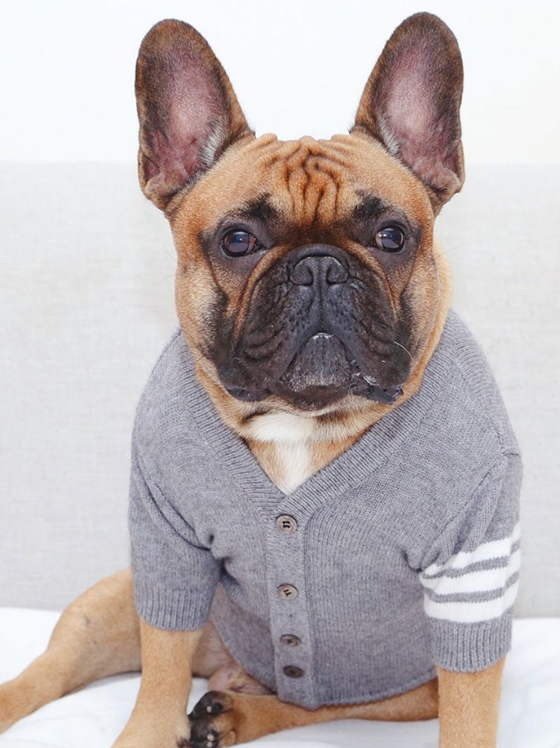 Flexible Grey Sweater Cardigan For French Bulldogs Bulldog