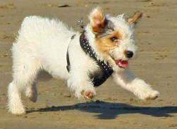 Winnie Dog