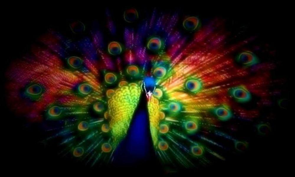 Peacock peacock peacock!