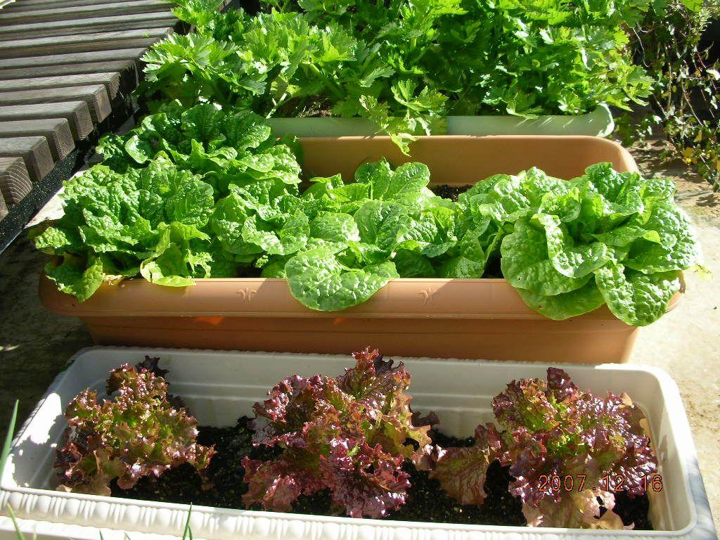 プランター野菜 プランター 野菜 家庭菜園 プランター プランター