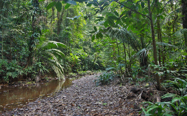 Imprecisos trazos de los viejos caminos coloniales