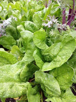 10 Fast Growing Vegetables You Can Harvest Quickly 400 x 300