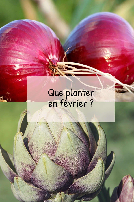 Que planter en février au potager ? Fiches pratiques du