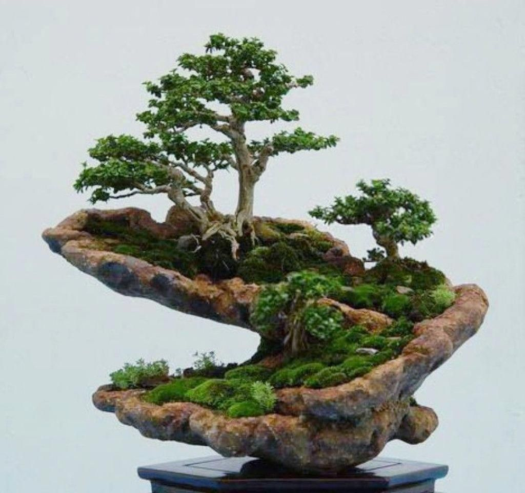 46 Very Attractive Bonsai Indoor Trees Ideas For Indoor Decorations #IndoorBonsaiTrees #bonsaiplants