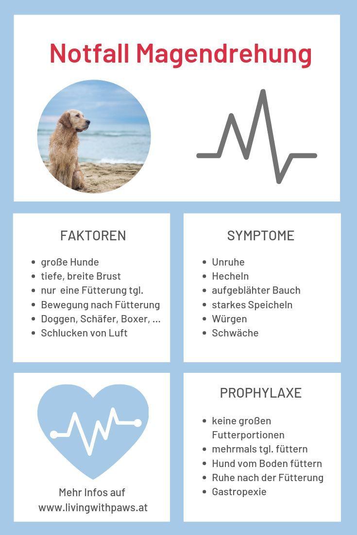 Magendrehung beim Hund - Symptome erkennen l livingwithpaws
