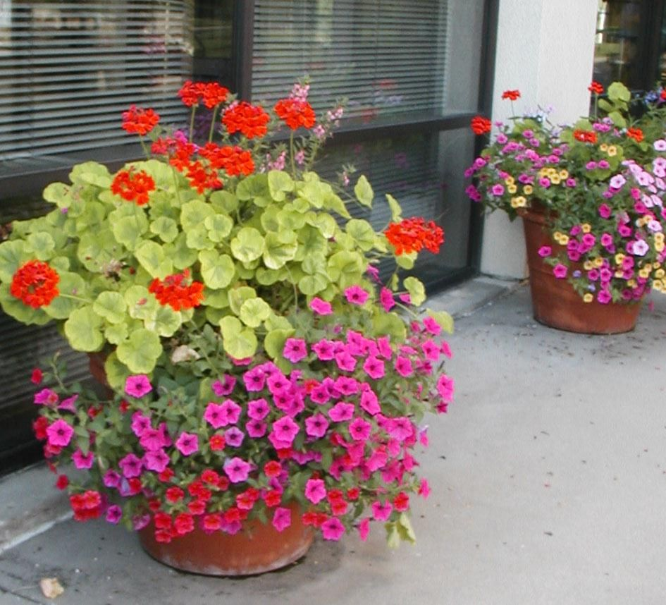 Colorful outdoor potted plants garden flowers for Yard planter ideas
