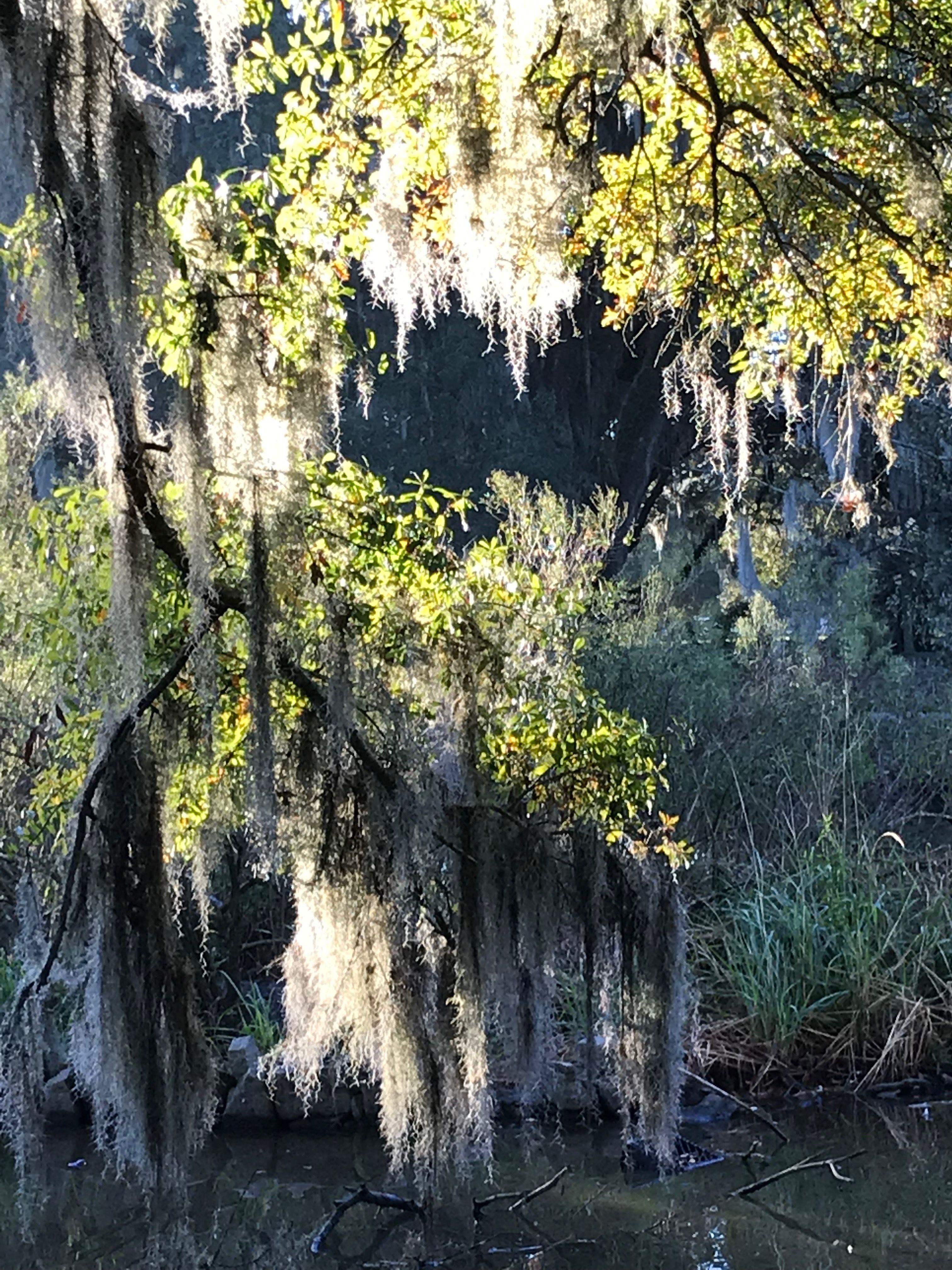 Pin by Coleen Marshall on Louisiana Beauty And History
