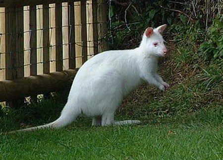 Photo of Amazing collection of Albino Animals, #albino #amazing #animals #collection