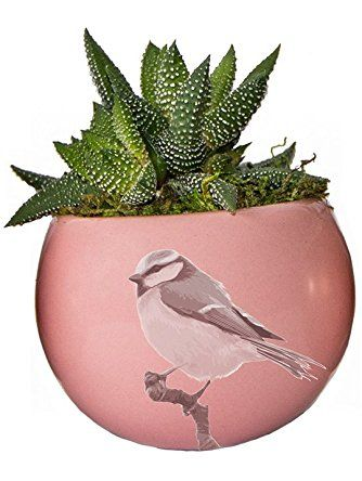 LiveTrends Life Magnetic - Living Succulent Decoration (Pink Bird) ❤ LiveTrends Design
