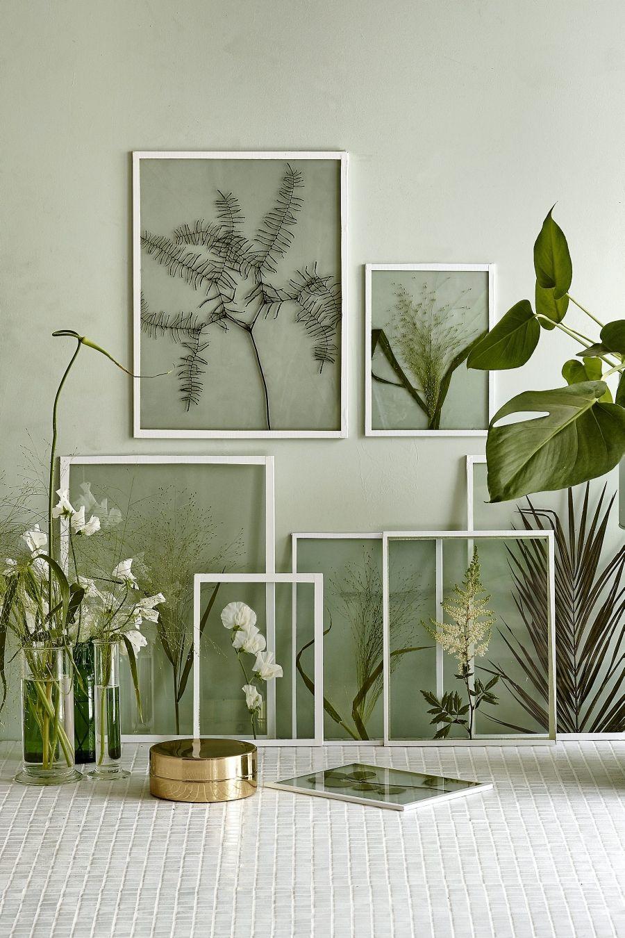 Grüne Wanddekoration für alle Pflanzenliebhaber und Gartenfreunde >> Framing dried plants and flowers in clear glass frames