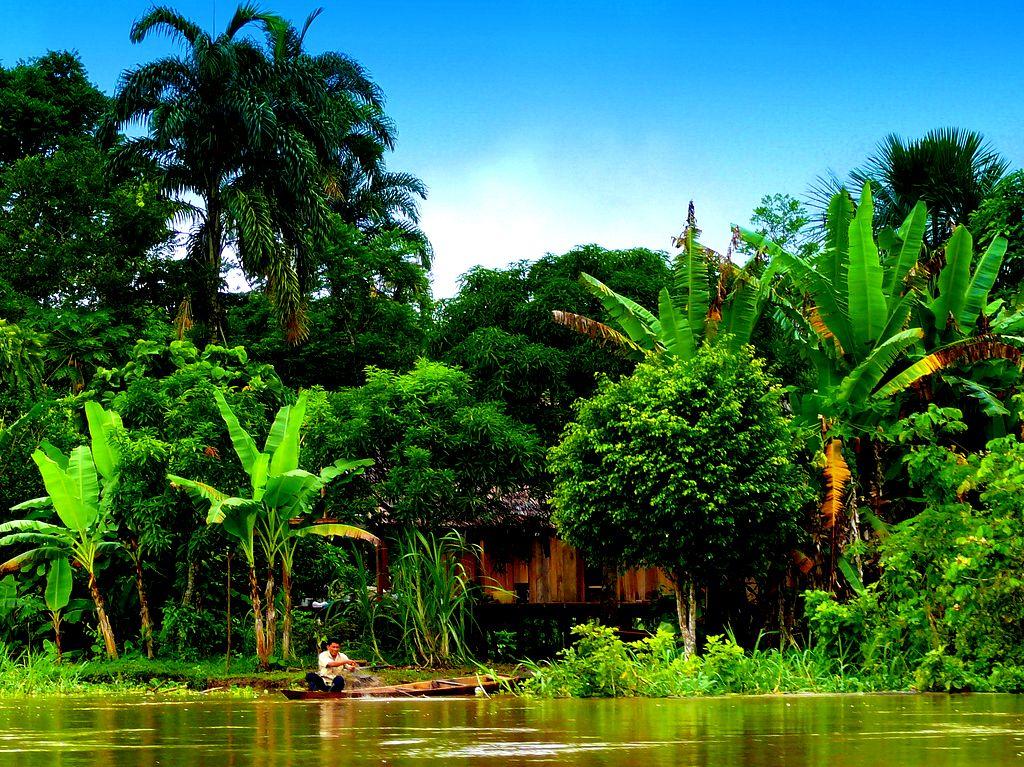 amazon rainforest south america - photo #28