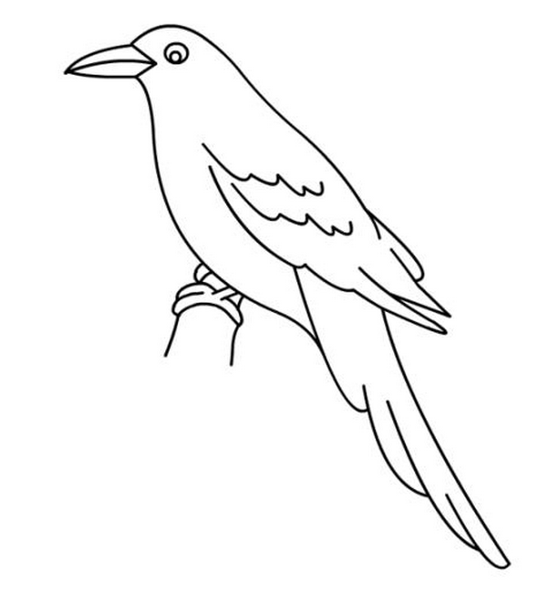 Free Bird Coloring Pages Pdf Free Coloring Sheets Bird Coloring Pages Owl Coloring Pages Animal Coloring Pages