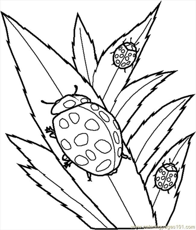 Coloring Pages Of Insects 783