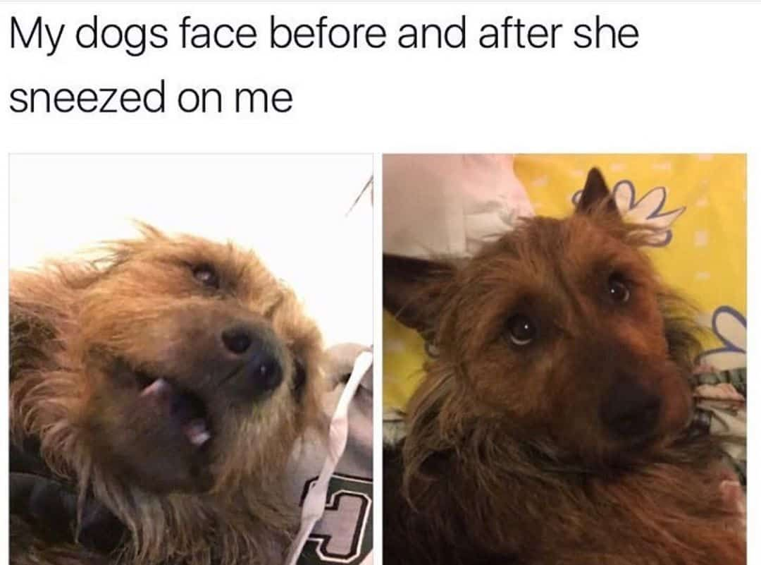 Dog Memes Of The Day 30 Pics Ep53 Animalmemes Dogmemes Memes Dogs Funny Dogs Dog Cat Cat Dog Memes