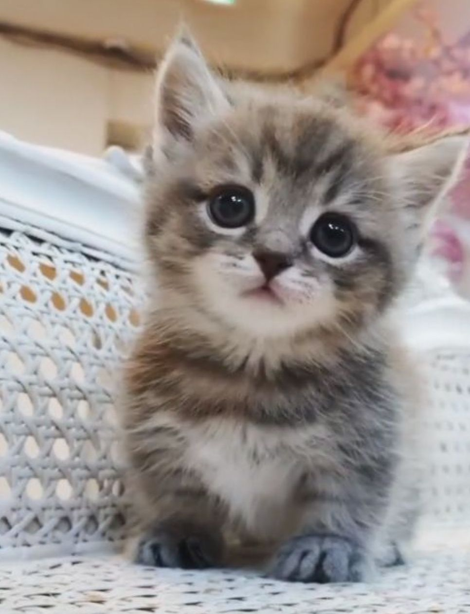 Pin By Kay Passmore On Kittens Cute Cats Cute Baby Animals Kittens Cutest