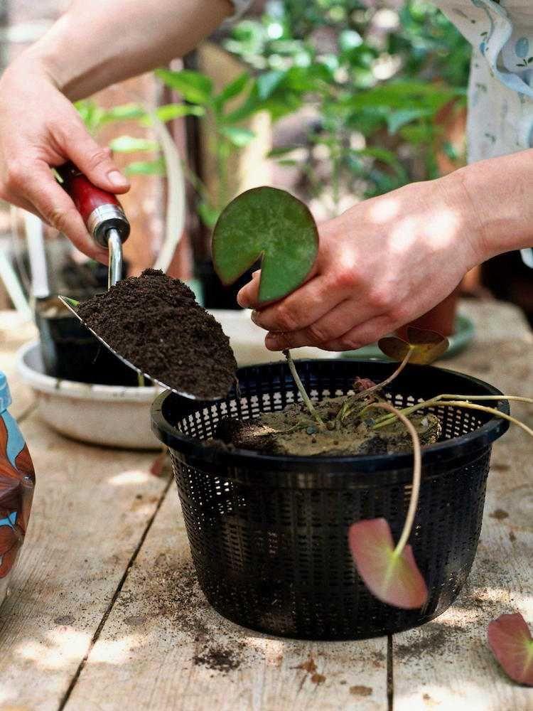 Créer un mini jardin aquatique – conception, flore adaptée et ...