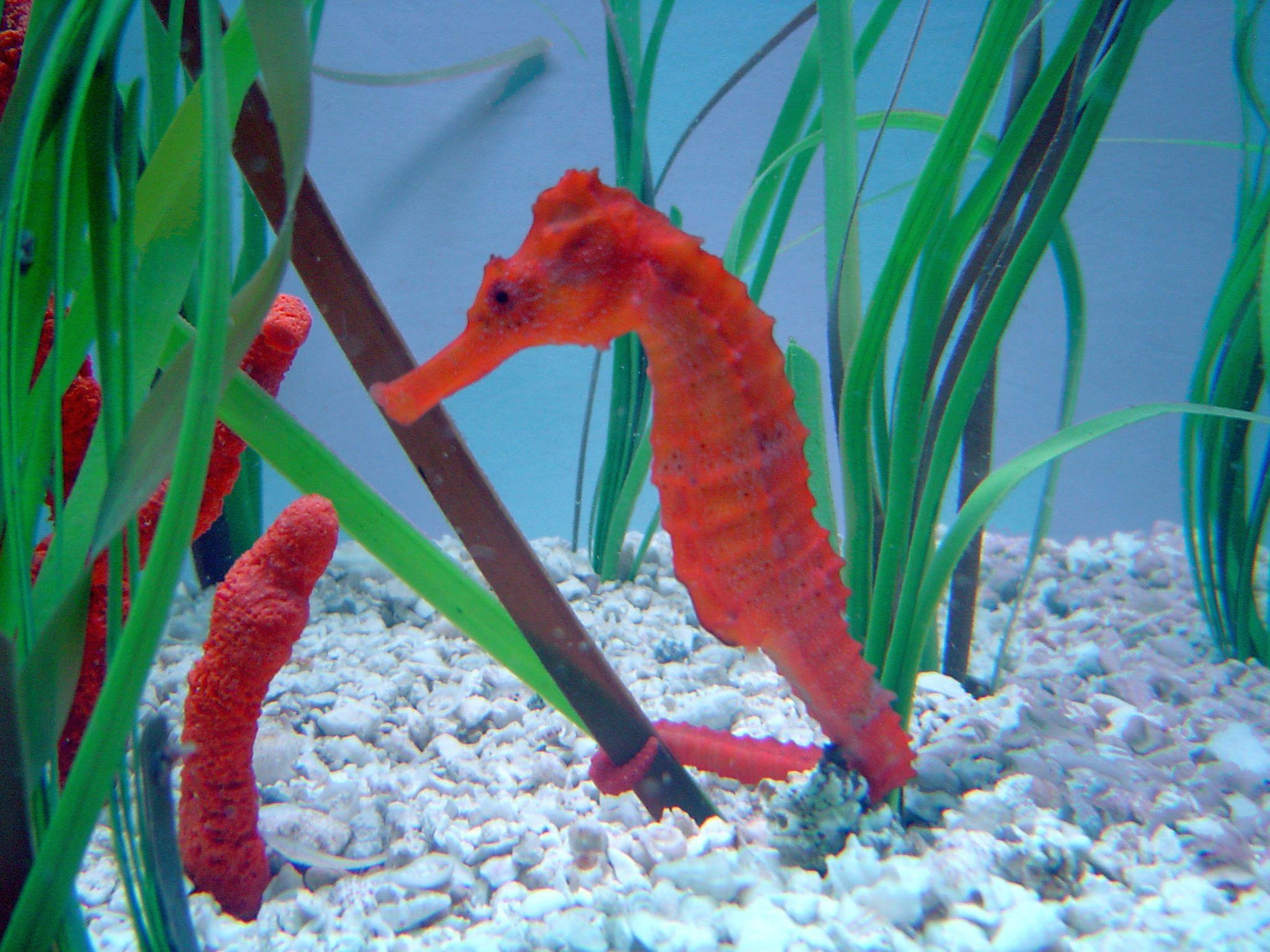 Customize scuba the countless underwater fish with the for Is a seahorse a fish
