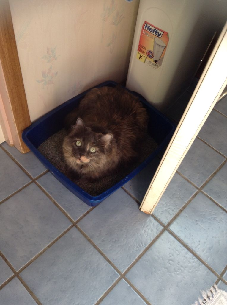 Angel in the just cleaned litter box, lol.