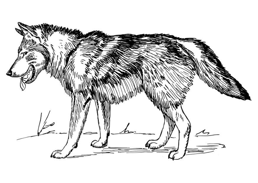 Free Printable Wolf Coloring Pages For Kids | Wolf, Konturen ...