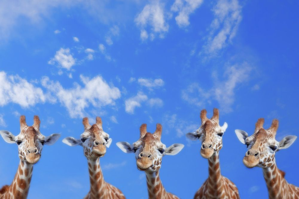 Blue skies long necks