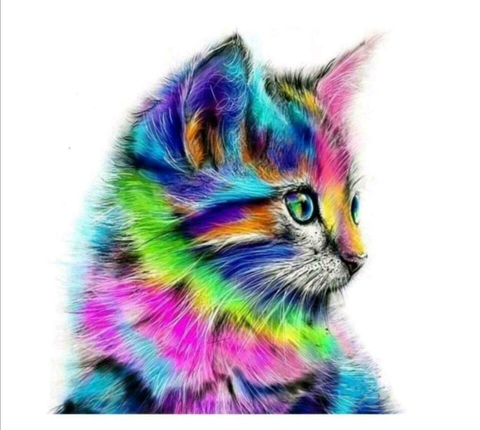 Bkh Katze Kater Gesucht British Kurzhaar In Nord Hamburg Fuhlsbuttel Britisch Kurzhaar Katzenbabys Kaufen Eb In 2020 Katzen Malereien Tiere Malen Katzenzeichnung