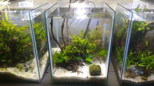 3 low tech aquascape nano tank | Nano tank aquascape ...