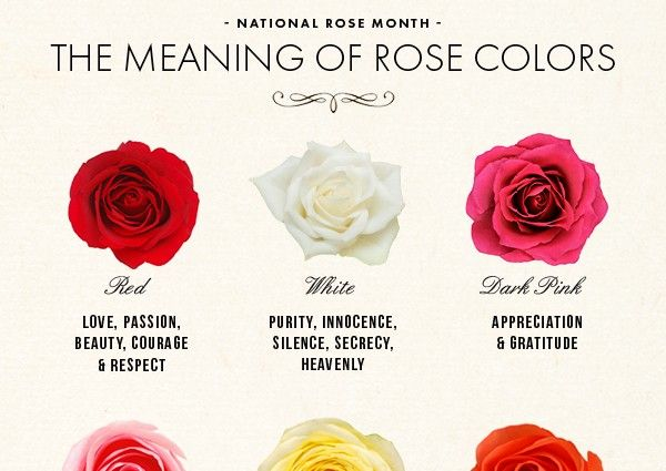 National Rose Month The Meaning Of Rose Colors Rose Color Meanings Rose Color Color Meanings
