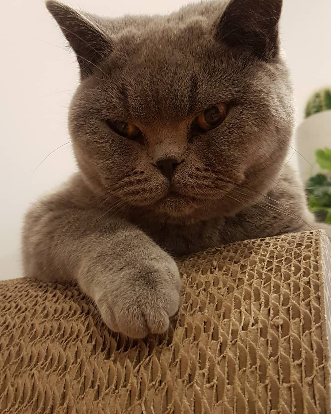 It Was A Warm Night Overnight In Melbourne I Tell You What I Am Grumpy And Tired Thank Gosh Its Friday Tgif Friyay Sleeping Mis Cat Day