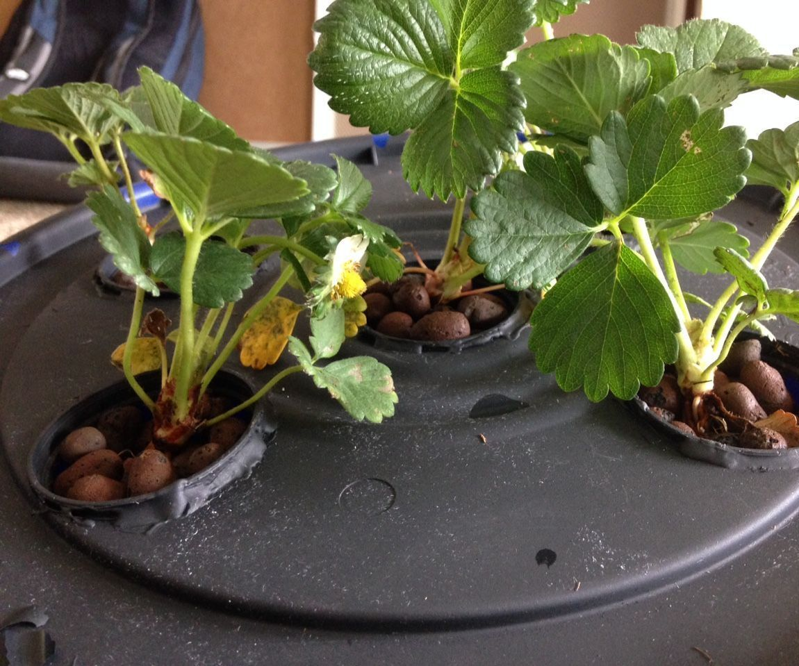 Aeroponics With Raspberry Pi and Humidity Sensor | Farm tech
