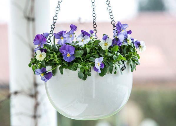Neue Violen für Blumenampeln und Pflanzkübel Garten-Haus - blumenampel selber machen hangekorb