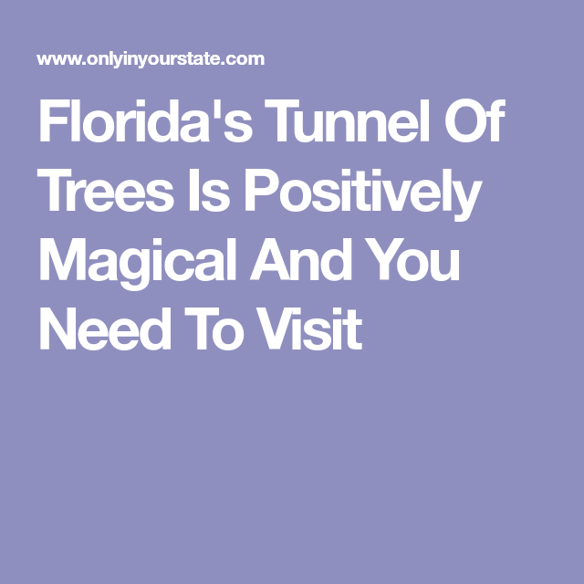 Arbor Oaks Florida: Florida's Tunnel Of Trees Is Positively Magical And You
