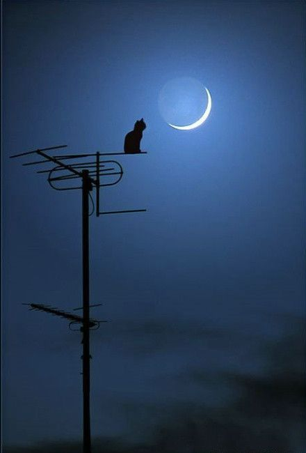 Cat, Moonlight.     Pretty cool!