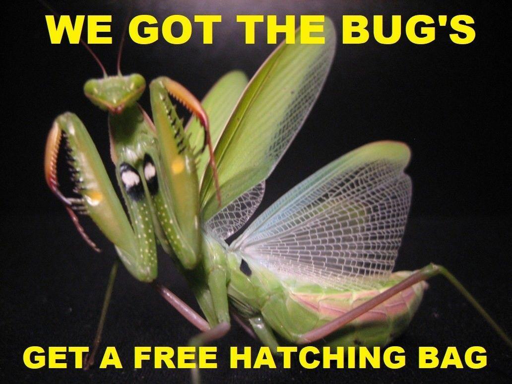 5 Real Live European Plus 5 Chinese Praying Mantis Egg Case Pest