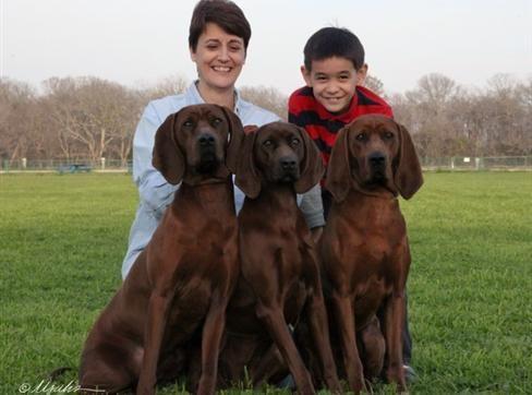 Redhawk Kennels Redbone Coonhound Puppies Redbone Coonhound