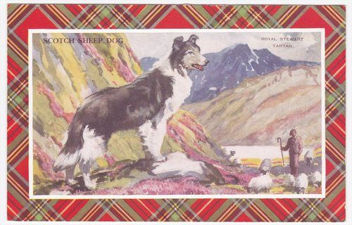 Royal Stewart Tartan Scotch Sheep Dog Valentine & Sons Postcard