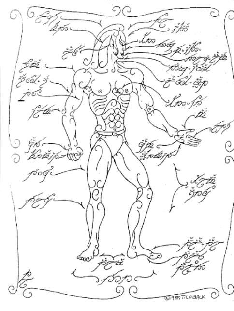 Tom Loback Chart Of Body Parts 1988 This Schematic Artwork