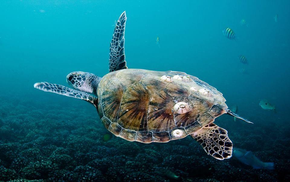 Marine Life At Sir Bani Yas Island Abu Dhabi الكائنات البحرية في جزيرة صير بني ياس ابوظبي