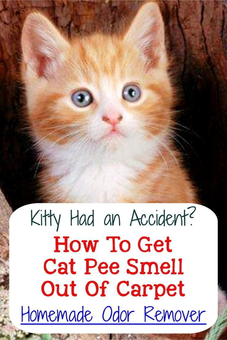 Cat Urine Stink? How To Get Rid Of Cat Pee Smell Cat pee