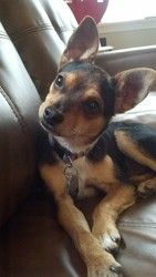 Adopt Froggy On English Bulldog Dog Bulldog Pics Bulldog