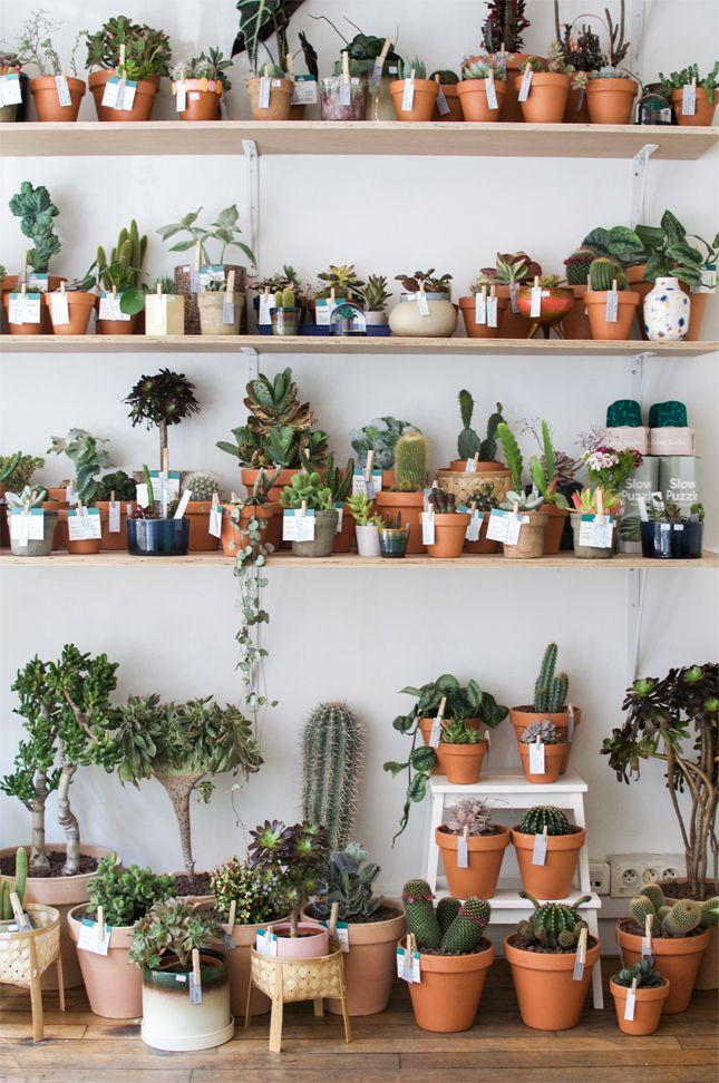 New Plant Shop in Paris: Le Cactus Club | Pinterest | Kaktus ...
