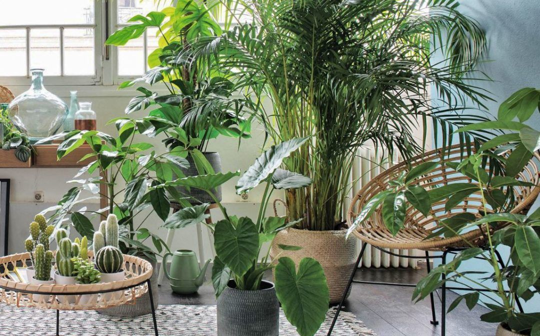 17 plants Interieur sans lumiere ideas