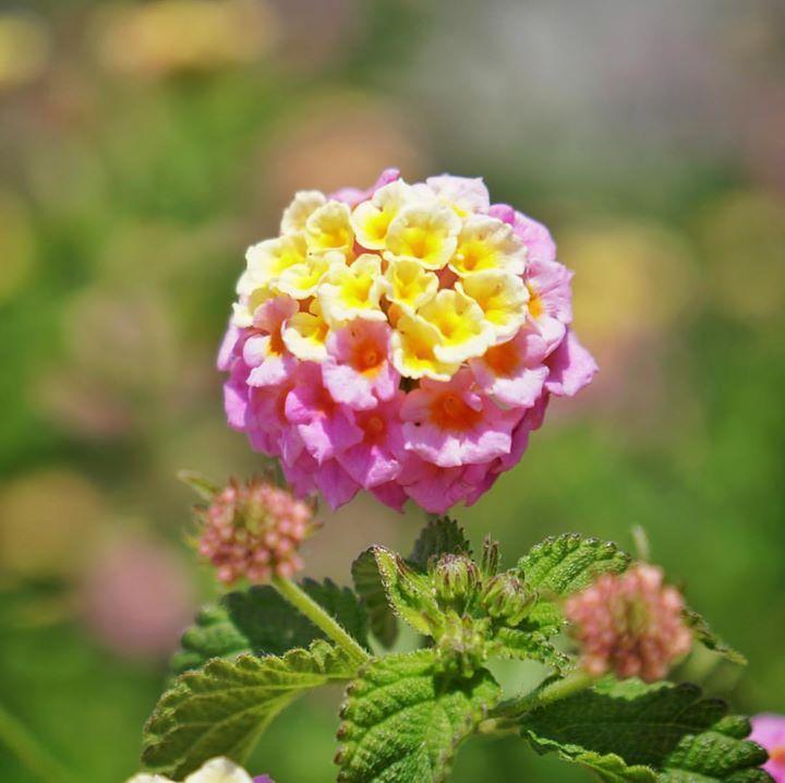 Flowerpower #flowers #flowerstagram
