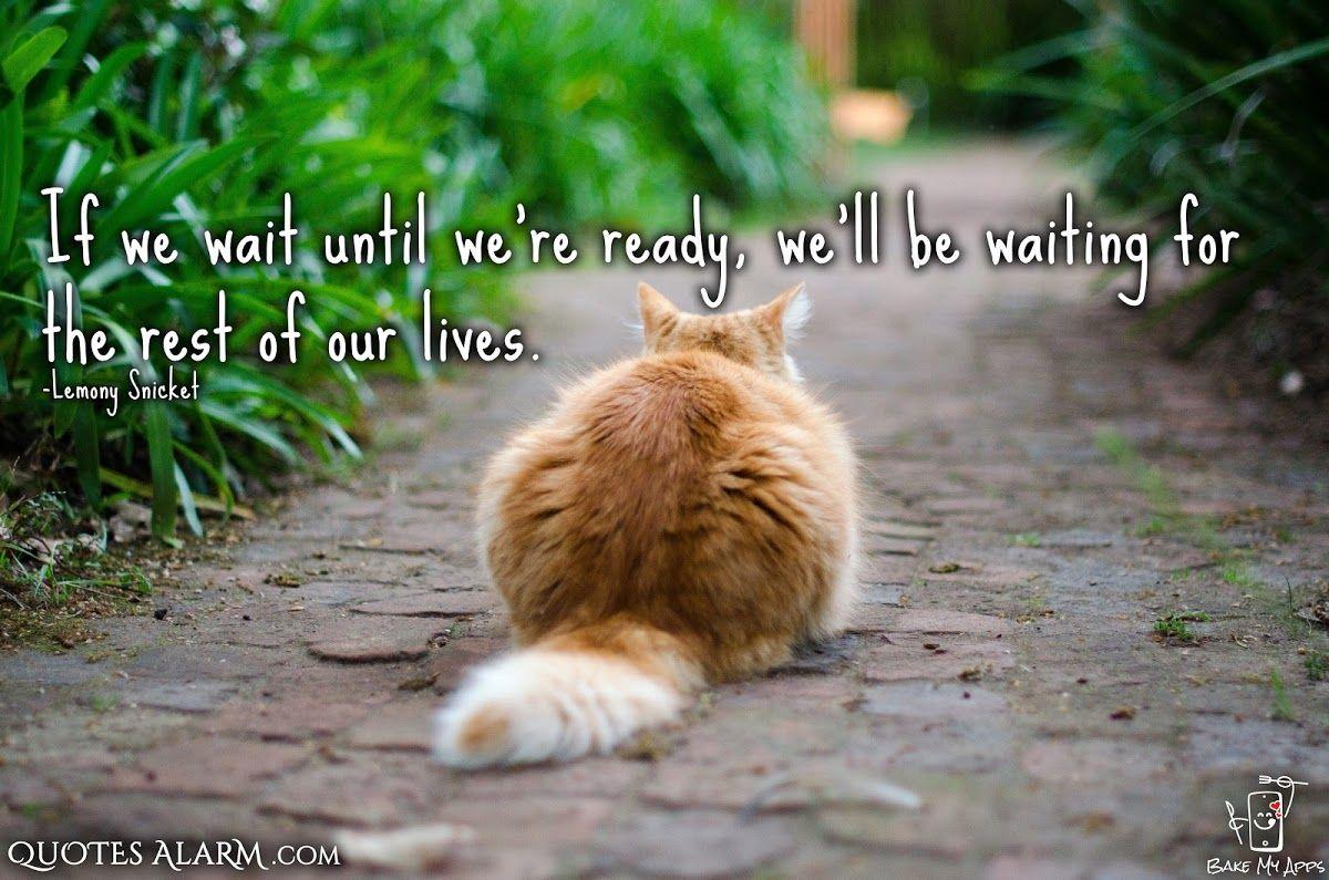 Saturdaymotivation Quotes Quoteoftheday Qotd Quote Cute Cat Wallpaper Outdoor Cats Cat Care